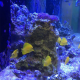 Learning Chemistry from a Saltwater Fish Tank - Student Research Foundation