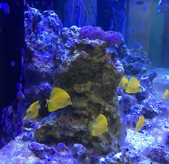 Learning Chemistry From A Saltwater Fish Tank Student Research Fdn