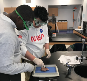 Dissecting Brains to Become Better Scientists - A high school project funded by Student Research Foundation